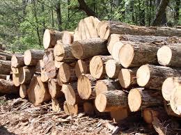Xuất nhập gỗ