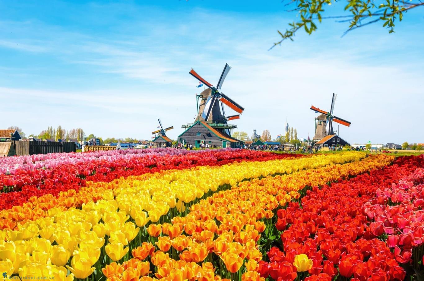 Chuyển phát nhanh đi Hà Lan giá rẻ