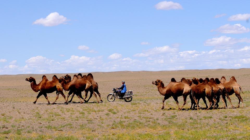 Chuyển hàng quốc tế từ Đà Nẵng đi Mông Cổ chất lượng cao